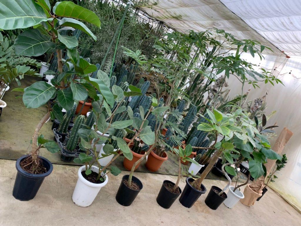 「植物と暮らそう!」