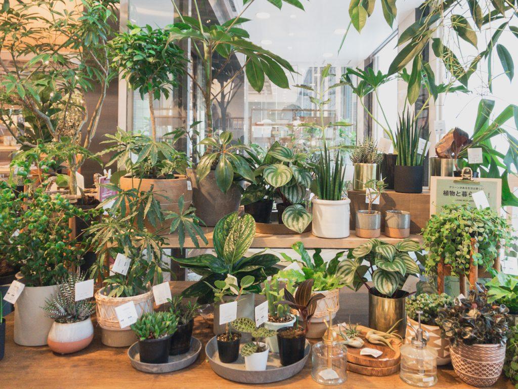 いま取り入れたい観葉植物