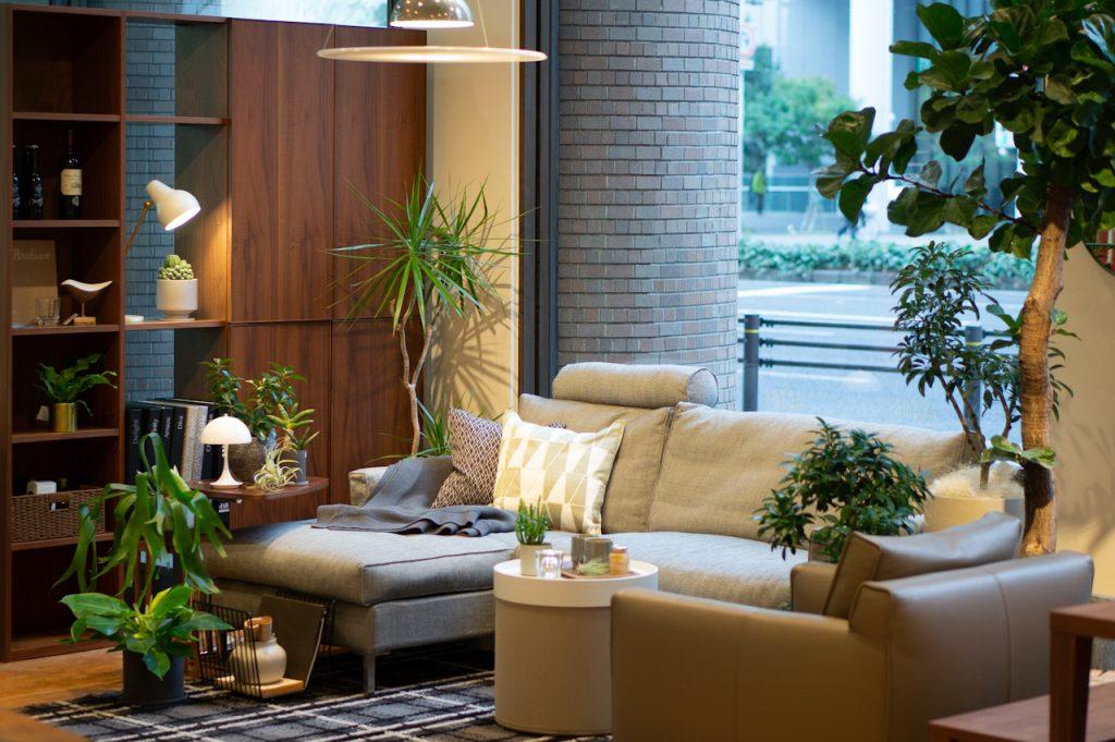 緑が少ない冬こそ、室内で楽しむ観葉植物